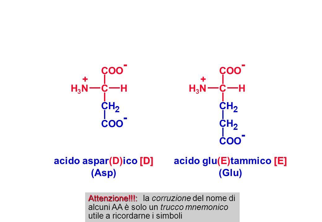 acido glu(E)tammico [E]